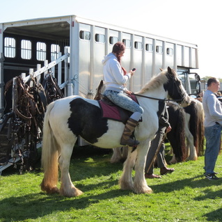 Photo of gypsy horse and rider.Picture