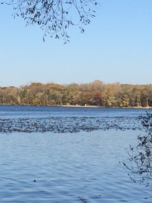 Picture of American Coots on lake.